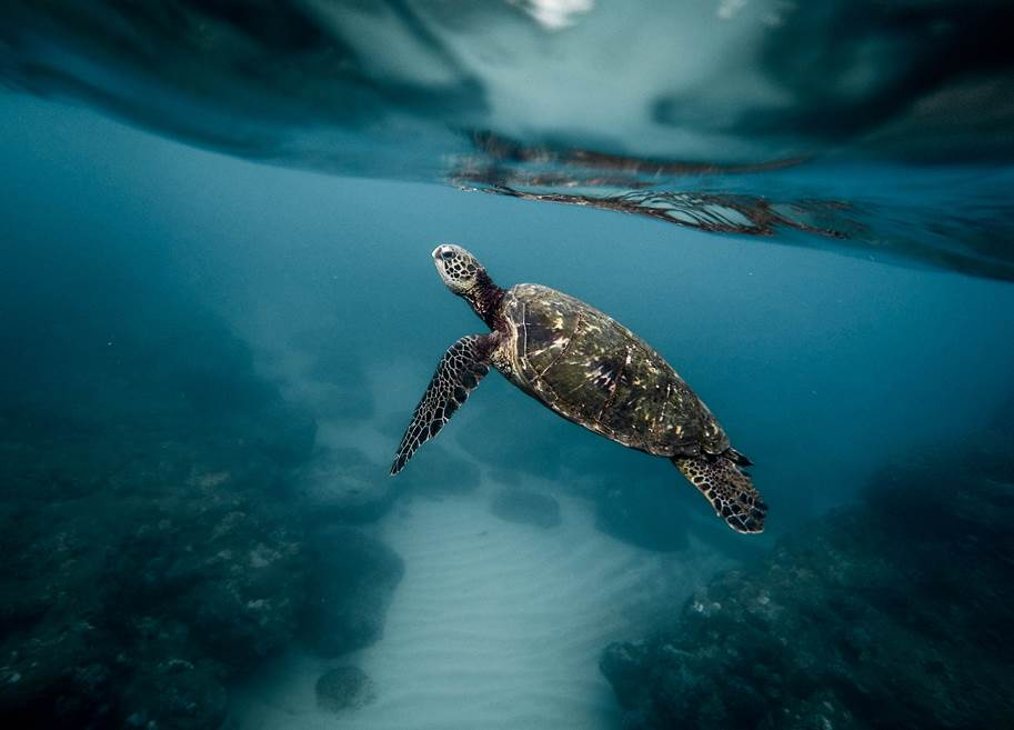 Turtle 2 Photo By Jeremy Bishop On Unsplash - Waitrose & Partners fund new ACU Blue Charter Fellowships to tackle marine plastic pollution