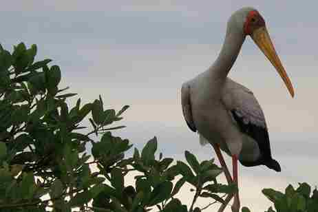 Botswana's marginalised voices - stork cropped2