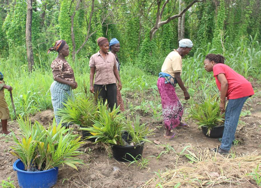 Researcher & Some Women Sorting Oil Palm