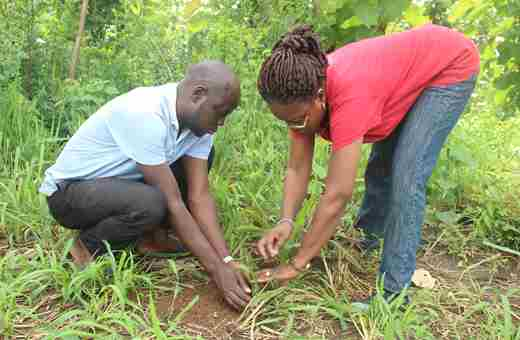 Researcher In Planting Action