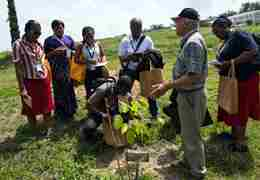 Commonwealth staff and students gather around a sapling